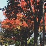 #autumncolor tree spam