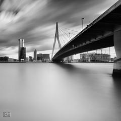 Rotterdam under the bridge