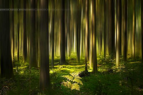 light forest photoshop nikon raw nef russia icm bouleau fougère d300 conifere taïga nikoncapturenx capturenx2 nikkor50mmf14g yllogo ©yannicklefevre||photography