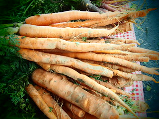 Carrots 1566