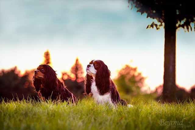 2012-09 Cavaliers At Sunset