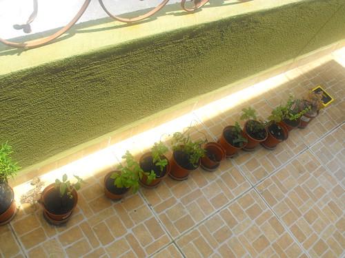 Plantitas en el balcón