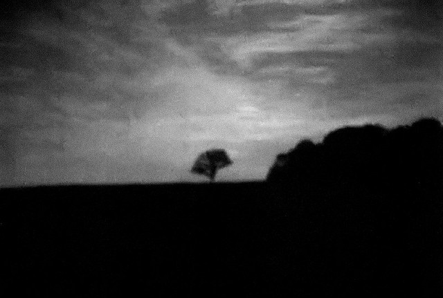 Shaw Nature Reserve (Arboretum), in Gray Summit, Missouri, USA - lone tree, blurry