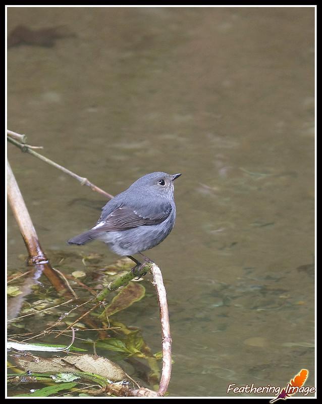 杉林溪鳥拍 -- 300mm打鳥點分享