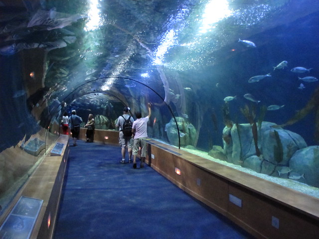 Valencia Aquarium Flickr - Photo Sharing!