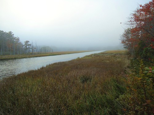 fog bank