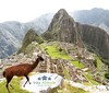 Enjoy the best treks and tours to #Machupicchu  with the best travel company . Www.inkaltitude.com