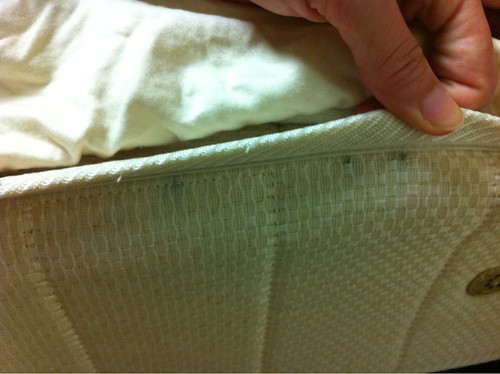 Image Result For Bed Bugs On Mattressesa