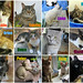 August adoptions by Goathouse Refuge