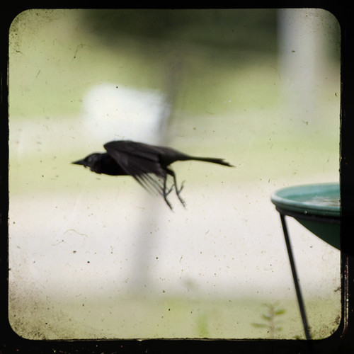 Bye bye blackbird by The Shutterbug Eye™