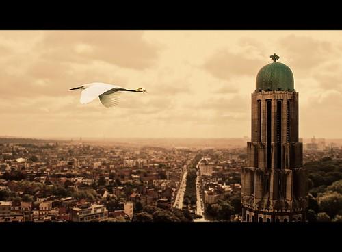 brussels bird church landscape nikon belgium belgique bruxelles paisaje ave processing bruselas tilt bélgica paisaxe tiltshift koekelberg d3000 nikond3000 nikon3000 mygearandme mygearandmepremium mygearandmebronze mygearandmesilver koekelbergkirk koekelbergchurch