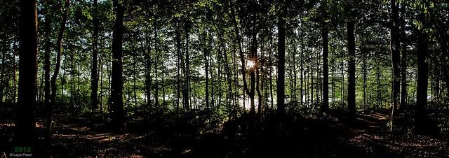 Bikepath in the forest (Erdei Kerékpárút)