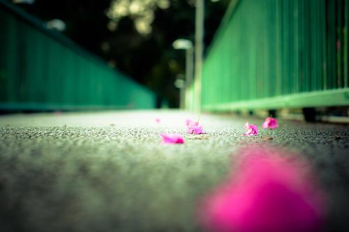 [フリー画像素材] 建築物・町並み, 道路・道, 花・植物 ID:201209111200
