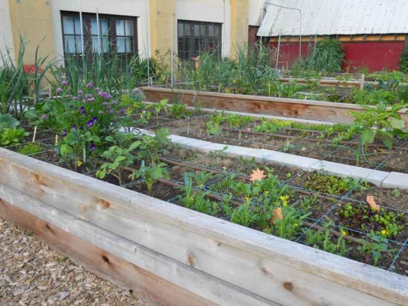 Community Garden Revelstoke Canada 3