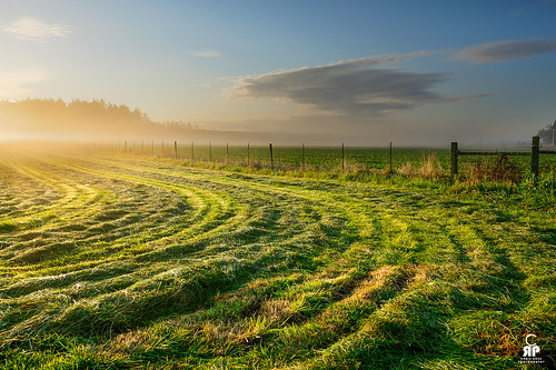 green field fog sunrise washington