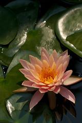2012-02-29 3296a  Thailand