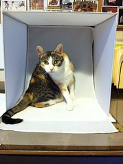 Kitty in my light box.