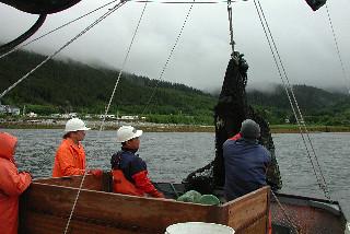 trawlingforFlatfish