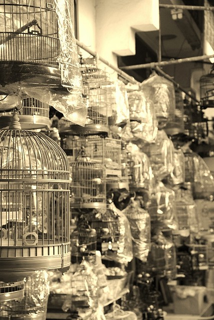 Bird Street Hong Kong_birdcages