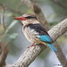 Kingfishers - Photo (c) Thomas Holmberg, some rights reserved (CC BY-NC-SA)