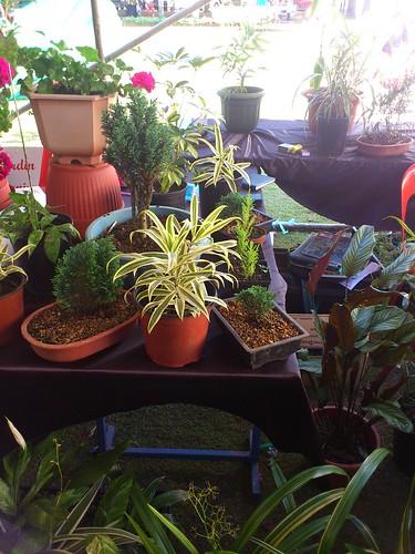 Mauritius Plant Show