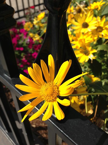Flower---Mystery