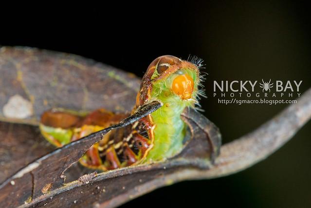Caterpillar - DSC_9454