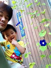 あさがお - 朝散歩 (2012/9/29)
