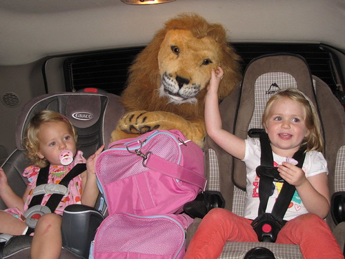 Lion in Car!