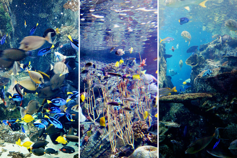 093012_aquarium08