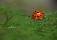 Feel lonly ---ladybug