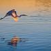 Sunrise Flight (GA) by Insight Imaging: John A Ryan Photography