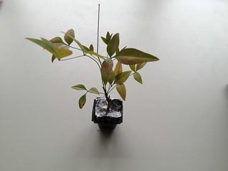 盆栽を作ってみた