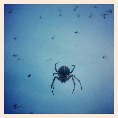 street spider by Valentyn Chub