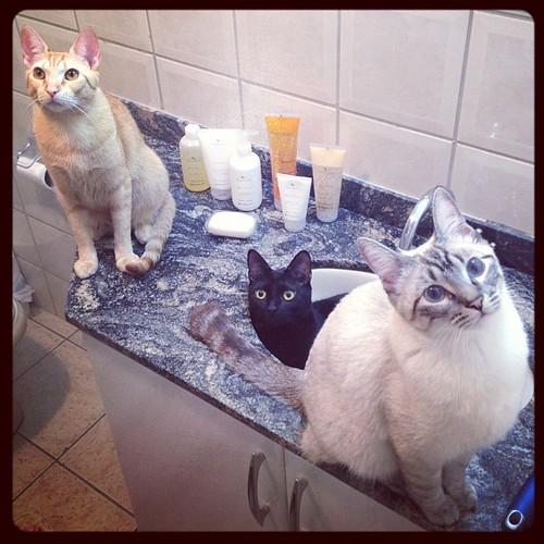 Conceitos em limpeza - Petlove - O Maior Petshop Online do Brasil
