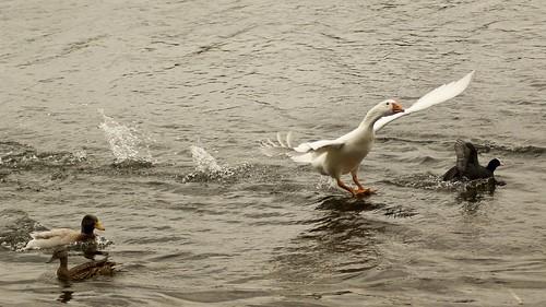 Landing by birbee