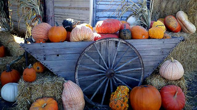 Gourd Wagon