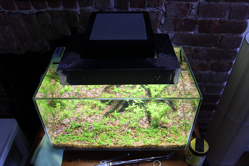 aquariuam lighting planted tank