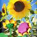 Origami Flower Garden. Sunflowers