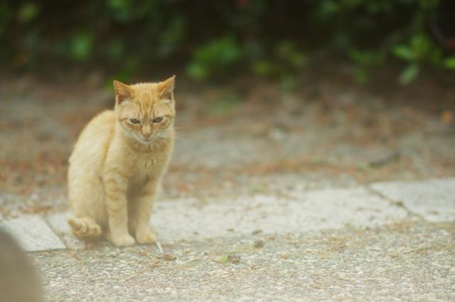 cat (74)