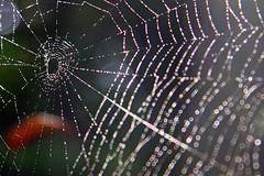 Web du jour