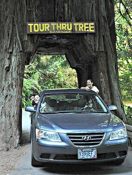 redwoods 5.jpg