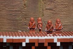 Chewie, Chewie, Chewie and Chewie in Legoland