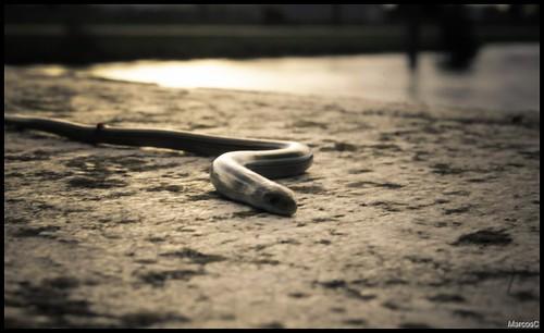 Mini serpiente by MarcosCousseau