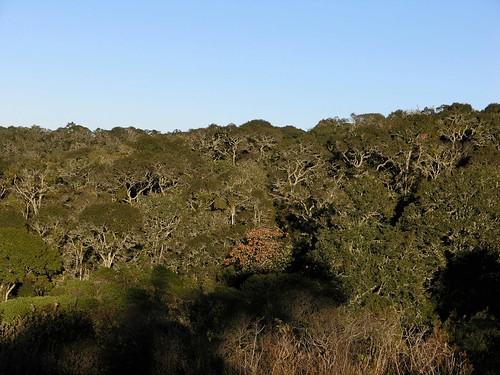 Forest surrounding Monte Negro - bosque que rodea a Monte Negro, Región Mixteca, Oaxaca, Mexico