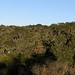 Forest surrounding Monte Negro - bosque que rodea a Monte Negro, Región Mixteca, Oaxaca, Mexico por Lon&Queta