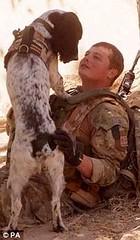Dog awarded Dickin medal
