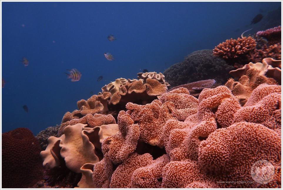 2012 07 23_Magda i Tomek Dookola Swiata_Fiji_P1040825