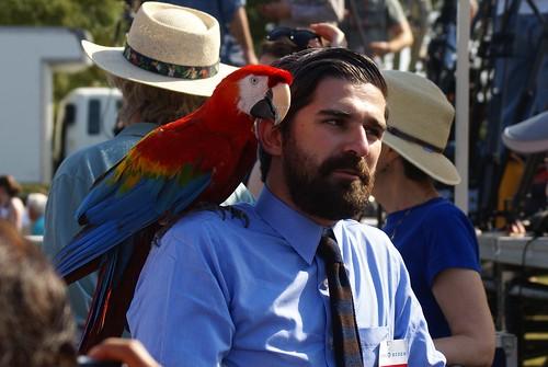 Macaw w/ Media