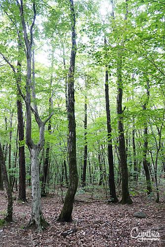 Sokcho - Trees
